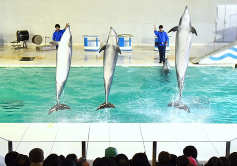 South American sea lion and dolphin show